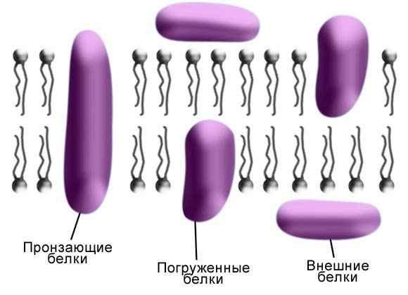Каменский А.А., Криксунов Е.А.